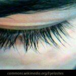 Όταν τα βλέφαρα γίνονται αυλαίες, της Έλενας Μαρούτσου