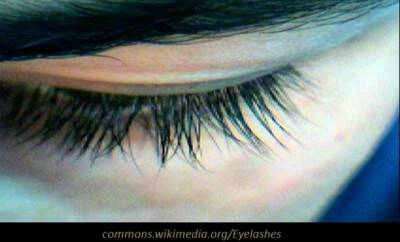 Eyelashes2_660x400_scaled_cropp