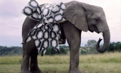 Giftress Guide Elephant _660_400_cropp