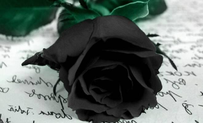 musical-black-rose-wallpapers-1024x768_660_400_cropp